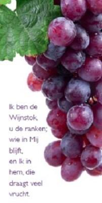 Ik ben de Wijnstok